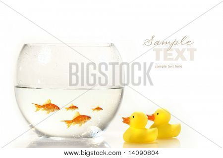Bowl with goldfish and little rubber ducks on white