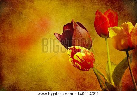 colorful blooming tulips on added beige brown paper texture