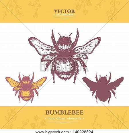 Bumblebee collection vintage style ink hand drawn vector