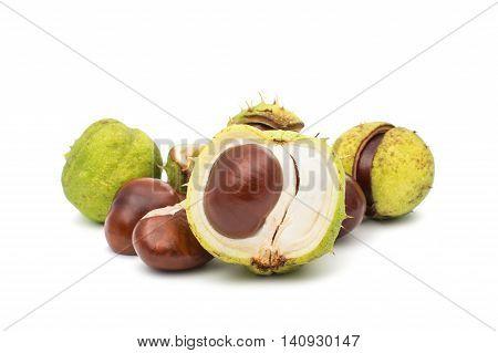 chestnuts horse-chestnut, thorn, botanic on white background