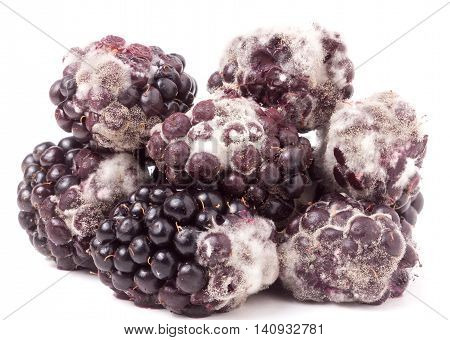 Blackberry tainted with mold isolated on white background.