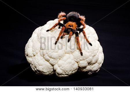 Close-up of metaphoric representation of brain cancer, of dementia, depression, schizophrenia. Tarantula on a cauliflower. Black background.