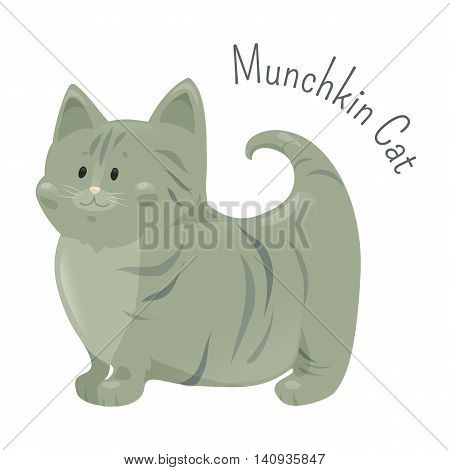 Munchkin cat isolated on white background. Very short legs type, caused by naturally occurring genetic mutation. Furry mammal. Part of series of cute cartoon kitten. Child fun icon Vector illustration
