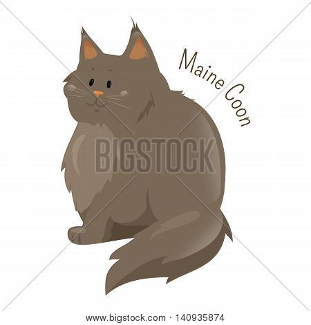 Maine Coon isolated on white background. Largest domesticated breed of cat, distinctive physical appearance and valuable hunting skills. Part of series of cartoon kitten species. Child fun icon Vector