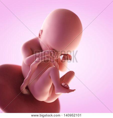 3d rendered medically accurate illustration of a fetus in week 19