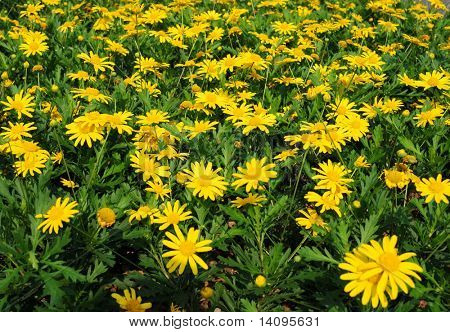yellow flowers (Forest of Flowers )