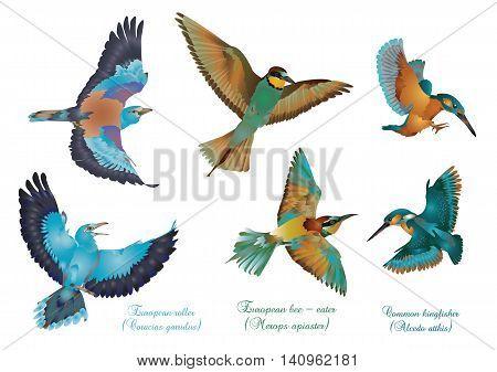 It is illustration of European beautiful birds.