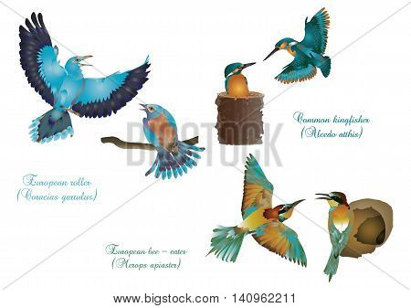 It is illustration of European beautiful birds couples .