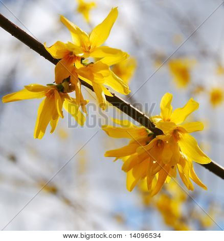 yellow flowers(Forest of Flowers)