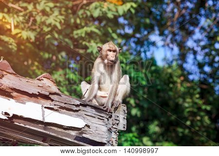 Adorable Monkey Sitting On A Moldy Wood On Blurred Nature Background.