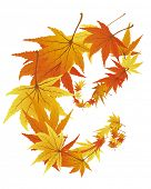 Twisted row of autumn  maples leaves. Vector illustration. poster