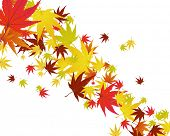 Pattern of autumn  maples leaves. Vector illustration. poster