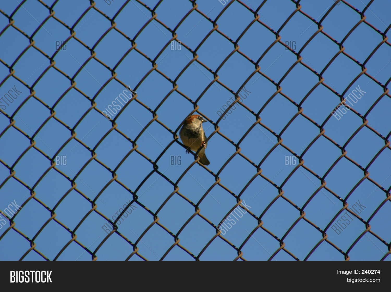 Bird On Wire Image & Photo (Free Trial) | Bigstock
