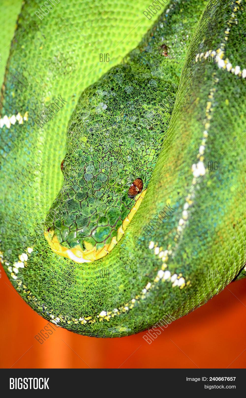 Amazon Basin Emerald Image & Photo (Free Trial) | Bigstock