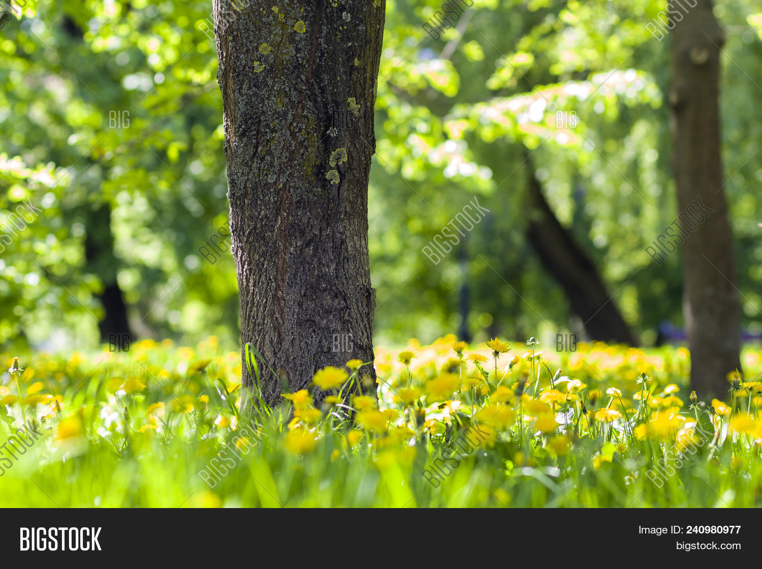 5993942f02c0e Beautiful spring or summer wild forest or park on bright sunny day. Thick  big tree trunk and lavishly blooming yellow flowers on blurred green  foliage bokeh ...