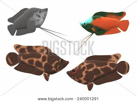 A Pair Of Leopard Bush Fish And A Pair Of Dwarf Gourami In A 3d Illustration