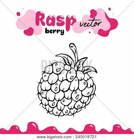 Raspberry Vector Illustration, Berry Clipart. Raspberry Vector Illustration For Logo, Design. Isolat
