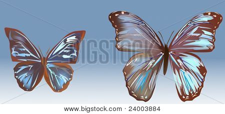 illustration with two blue butterflies