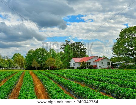 A Beautiful Country Home With A Red Roof On A Farm With Rows Of Green Tilled Crops And A Dramatic Cl