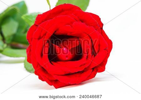 Red rose on white image photo free trial bigstock red rose on white background beautiful blossom with velvet petal hot pink flower banner mightylinksfo