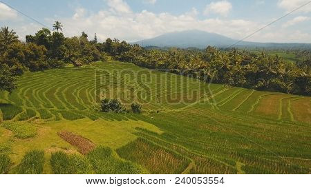 Aerial View Of Rice Terrace Field, Farmlands. Rice Plantation, Terrace, Agricultural Land Of Farmers