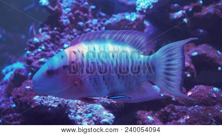Fish And Coral Reef. Tropical Fish On A Coral Reef. Wonderful And Beautiful Underwater World With Co