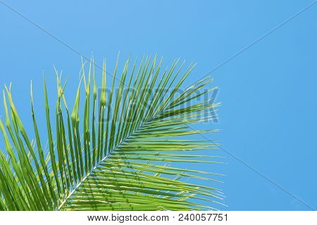 Green Palm Tree On Turquoise Blue Sky Background. Single Palm Leaf Banner Template With Text Space.