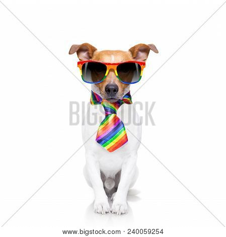 Crazy Funny Gay Dog Proud Of Human Rights ,sitting And Waiting, With Rainbow Flag Tie  And Sunglasse