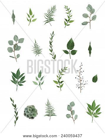 Vector Designer Elements Set Collection Of Green Eucalyptus, Art Foliage Natural Leaves Herbs In Wat