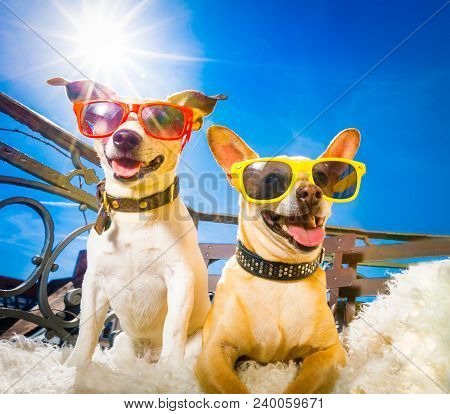 Couple Of Dogs  With Sunglasses At Balcony  Enjoying The Sun And Hot Weather At Summer Vacation Holi