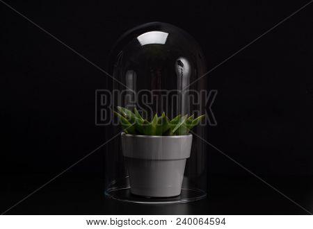 Succulent Houseplant Inside A Glass Terrarium.