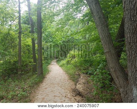 Path Or Trail In The Woods Or Forest With Trees