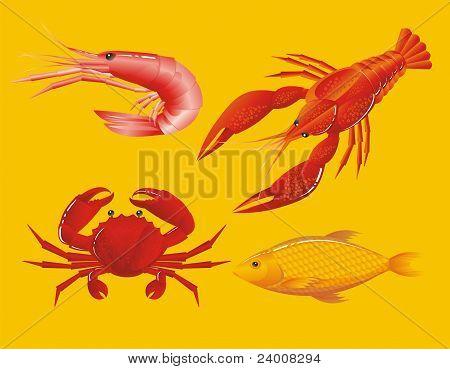 Zeevruchten: Garnalen, langoesten, krab en vis