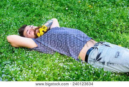 Springtime Concept. Hipster With Bouquet Of Dandelions In Beard Relaxing. Man With Beard On Smiling