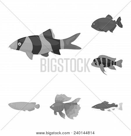 Different Types Of Fish Monochrome Icons In Set Collection For Design. Marine And Aquarium Fish Vect