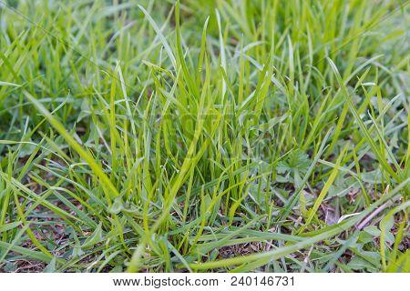 Green Grass. Natural Grass. Green Grass.