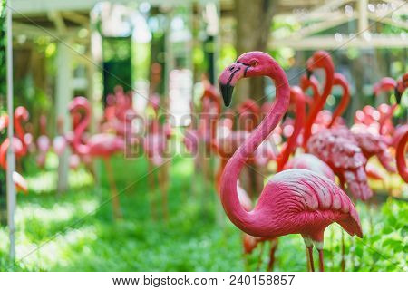 Pink Flamingos Against Green Bokeh Background In The Park.