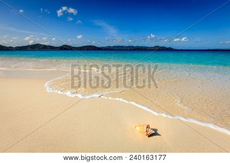 Conch on a beautiful beach on a small island in BVI