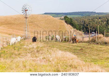 Farming Animals Road Highway Landscape