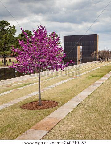 Oklahoma City, Oklahoma / Usa - March 31, 2018: Beautiful Pink And Purple Tree At The Oklahoma City