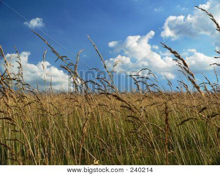 Golden Farm Land