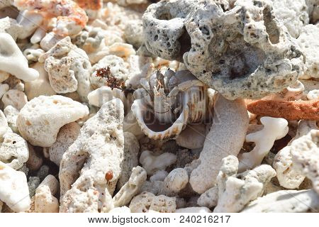 Hermit Crab On The Beach Surrounded By Corals In Seychelles