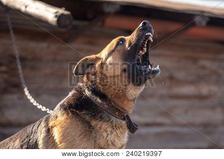 An Angry Dog Barks Near The House .