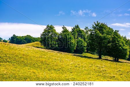 Beech Forest On Grassy Hillside. Lovely Scenery Of Carpathian Landscape In Summer. Location Svydovet