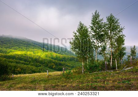 Birch Trees Behind The Fence On A Hillside In Autumn. Lovely Countryside Scenery In Mountains Under