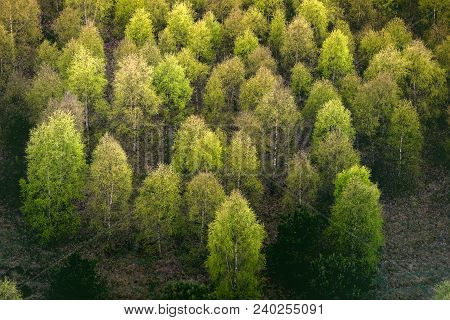 Colorful Trees In A Forest From Above In Green And Yellow Colors In The Fall