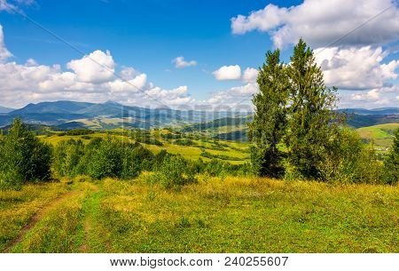 Autumnal Countryside Of Carpathian Mountains. Country Road Through Grassy Meadow, Two Giant Spruce T