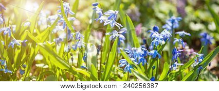 Field Of Spring Flowers. Banner Concept
