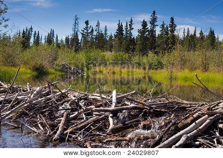 Beaver's Dam and Lodge
