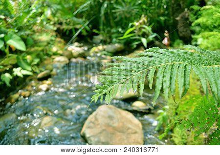 Water Flow Brook, Nature Stream, Natural Environment